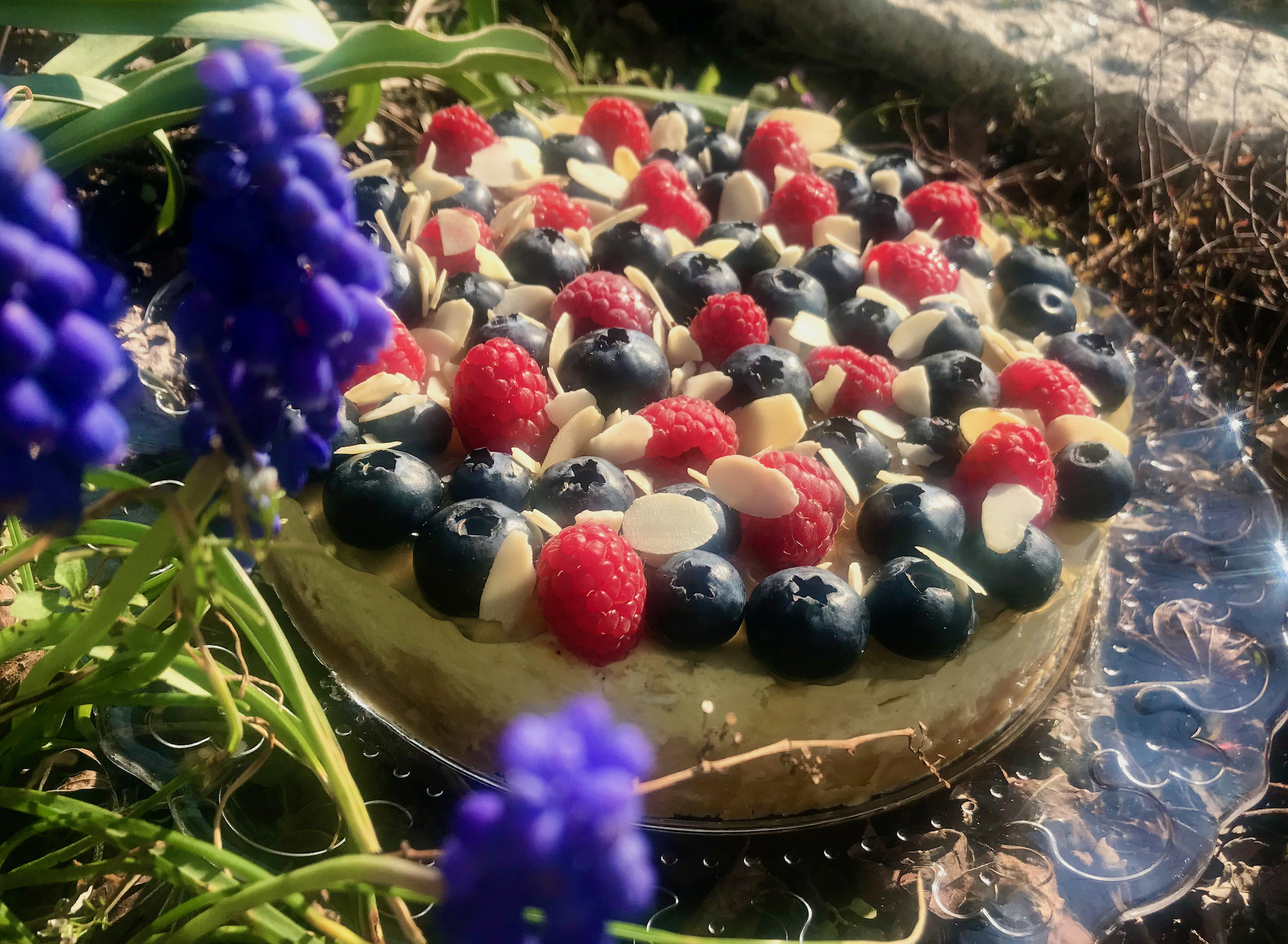 Lime-Cheesecake